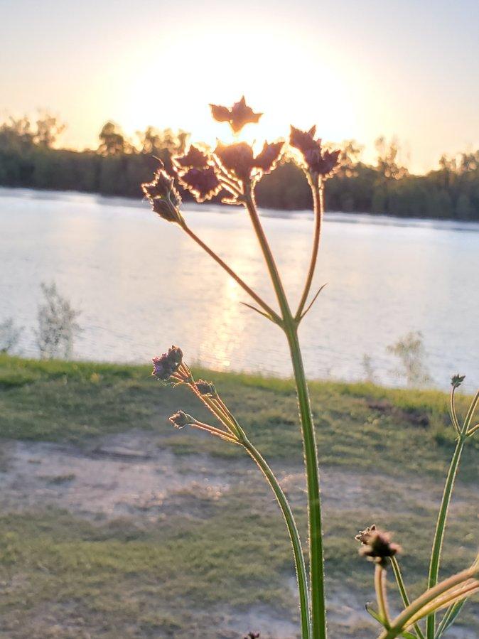 Vicksburg – just atouch